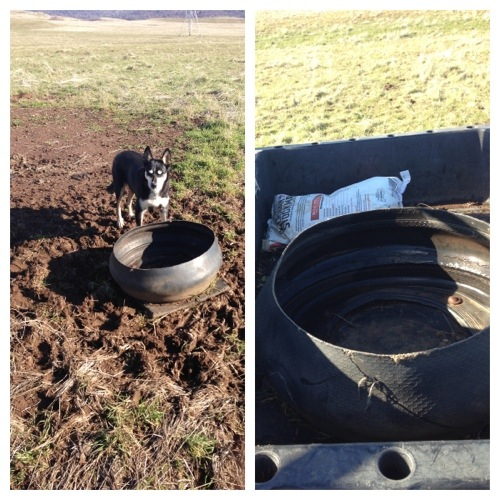 "I had to first go to the ""Adobe"" field to get the tire that was made into a salt trough.  Ranchie helped."
