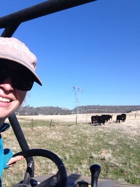 I took a felfie (a farmer 'selfie') while moving the steers into their new pasture.