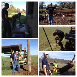 Steel experienced the whole package from pigs to lots and lots of fence building.
