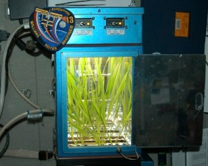 L'orge dans l'ISS