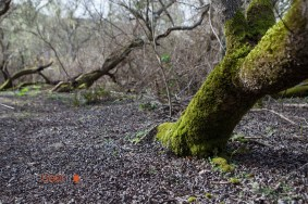 A Mossy View