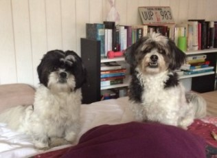thumbnail_baby-dogs