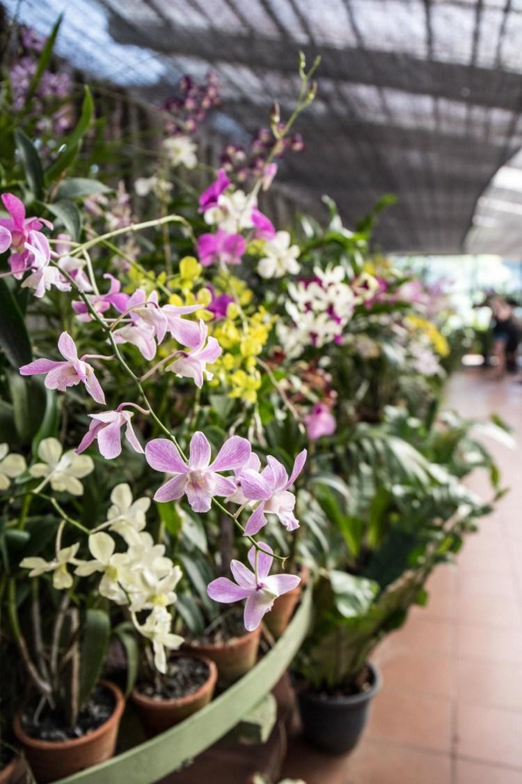 Orchid House in the Royal Botanical Gardens (Peradeniya Park), Kandy, Sri Lanka. Photographed by Shika Finnemore - thebellephant.com