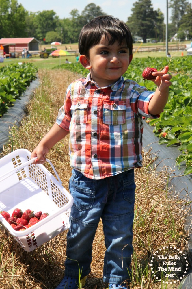A Strawberry picking