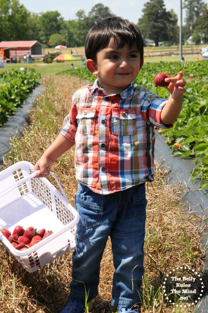 A Strawberry picking