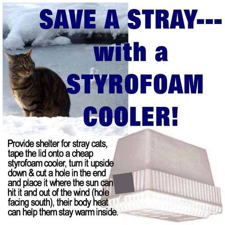 how to help stray cats in the cold weather thebestcatpage. Black Bedroom Furniture Sets. Home Design Ideas