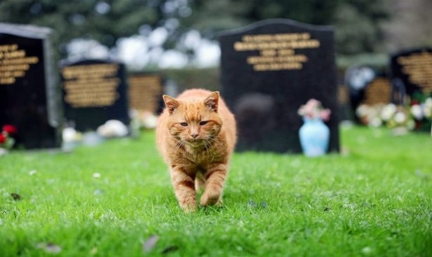 Legend: Barney the ginger tabby cat