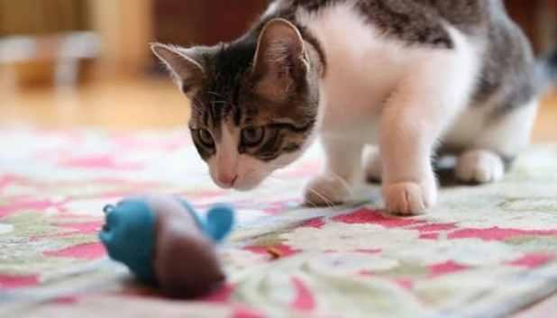 nobowl-cat-feeding-system-3-min