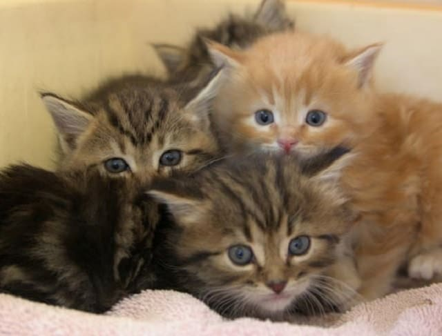 Litter of feral kittens.