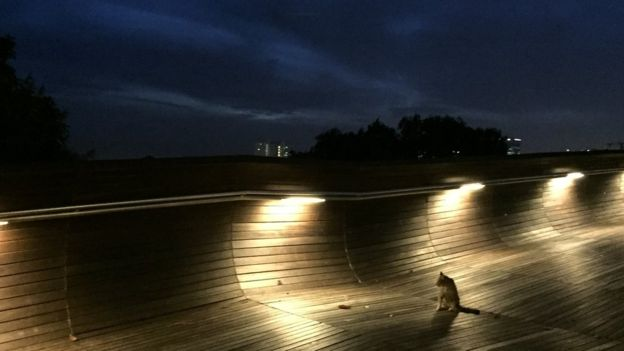 It's almost impossible not to spot a community cat while out at night in Singapore