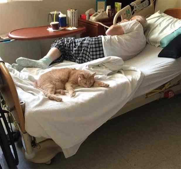 Tom brings comfort to a veteran who sleeps better knowing his cat friend is there.