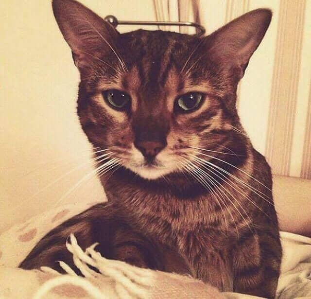 The Bayler family are 'over the moon' after being reunited with their cat Zinzan, who went missing for eight weeks.