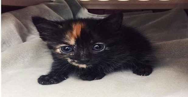 This kitten was rescued Saturday from the Komodo dragon exhibit at the Fort Worth Zoo.