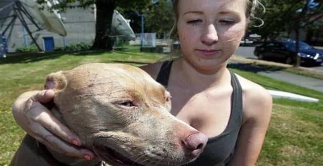 Kyla Grover and Bandida were injured after a cat attacked a group of seven dogs in Saanich on Monday, Aug. 15, 2016.
