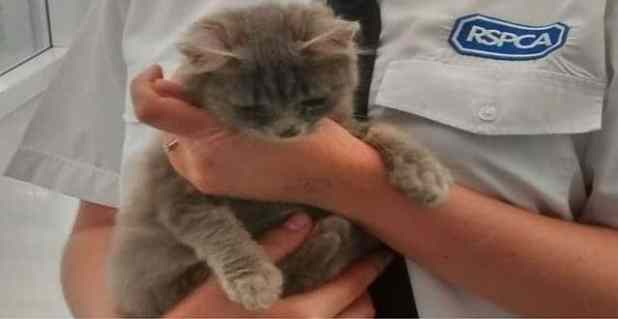 This kitten, now named Tilly, is being treated by the RSPCA after being found dumped in a box