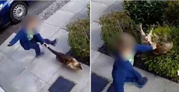 Horrifying Moment Boy Kicks and Punches Cat Before Brave Feline Gets Ultimate Revenge!