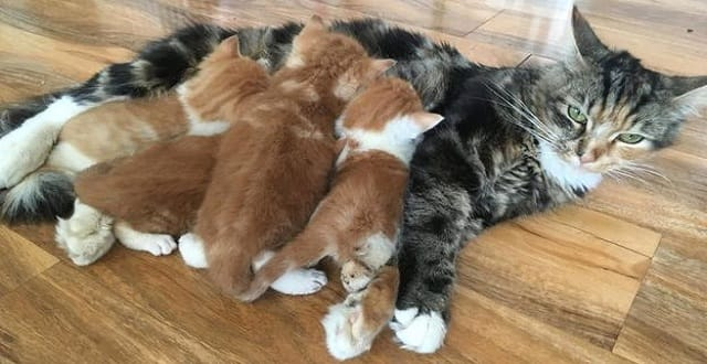 The kittens were reunited with their mother who was found outside the shop