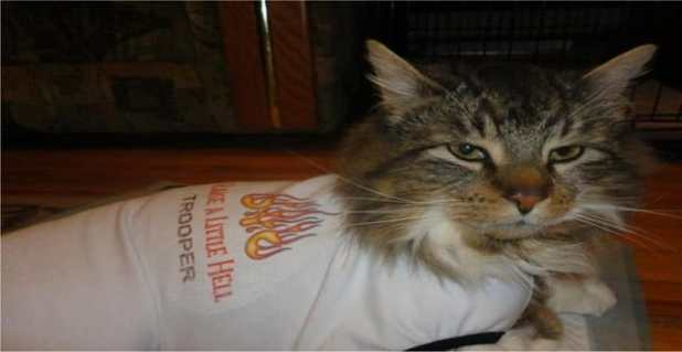 Trooper, the cat rescued from a frozen driveway in 2102 had to be put to rest this week due to cancer.