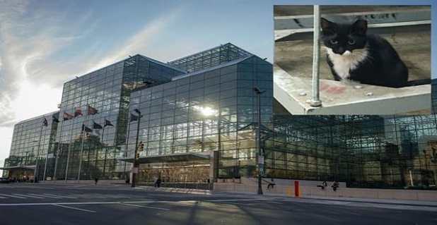 """Sylvester (inset), one of the feral cats """"employed"""" by the Javits Center."""