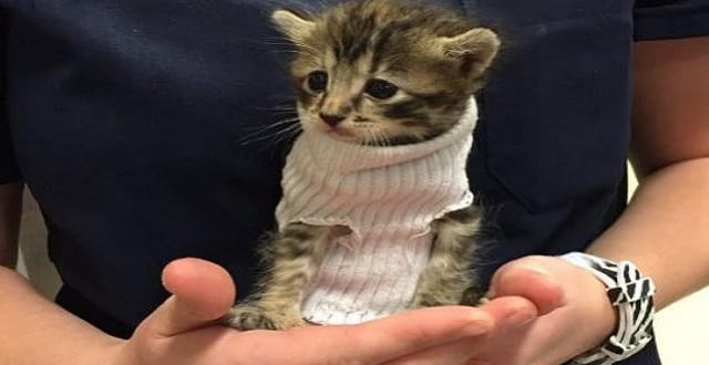 He was given a jumper, made out of a sock, and a new home CREDIT: TWITTER/@CRYSOMEMORE