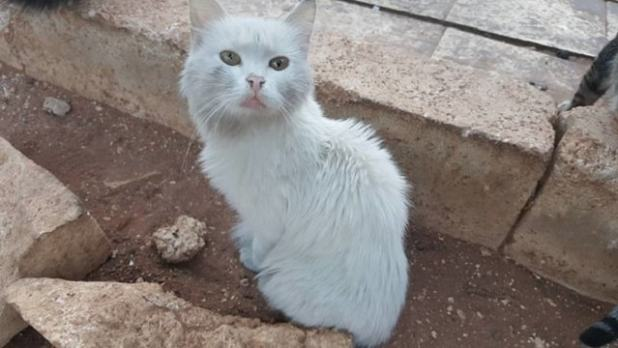 MOHAMMAD ALAA ALJALEEL A photo of a cat at the sanctuary weeks prior to the bombing.