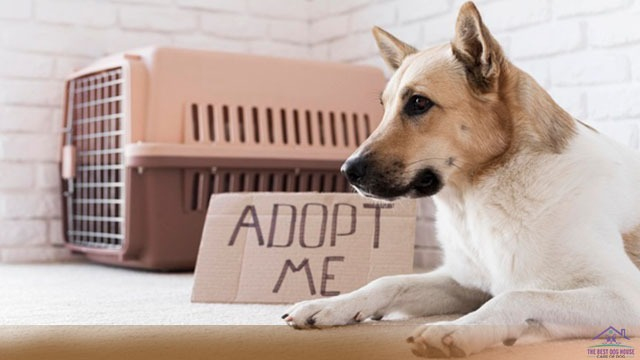 how much does it cost to adopt a dog