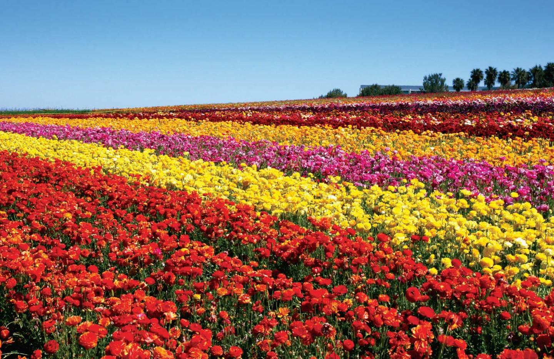 flower.fields.bg_.jpg