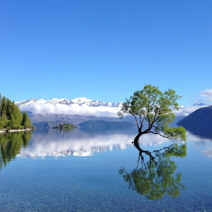 That-Wanaka-Tree-Spring