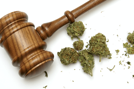 dagga-license-south-africa-gavel-bud-min