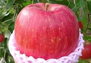 リンゴ返礼品ランキング ふじ