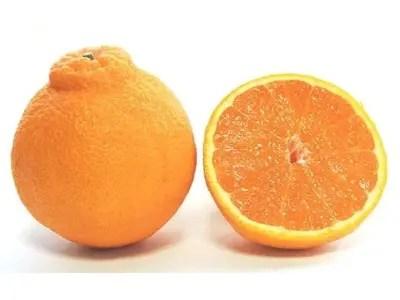 井手尾さん家の濃厚いでぽん 不知火 約5kg 柑橘