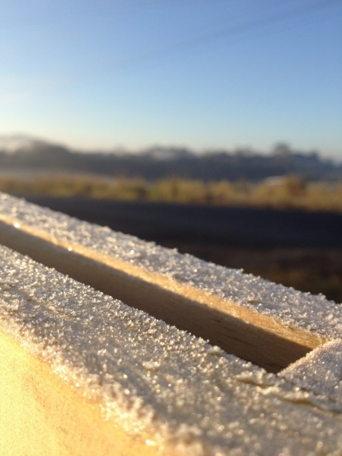 Auckland Frost