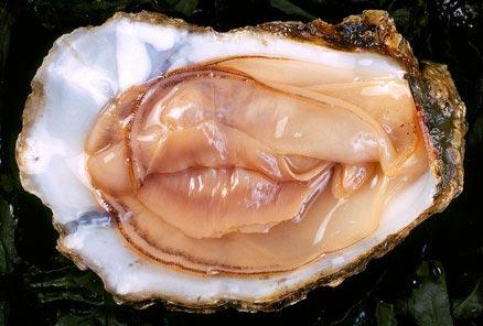 oyster_sexyWEB