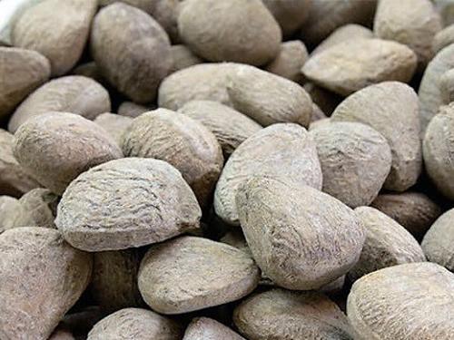 Utilization of Kepayang (Pangium edule) Seeds as Meat Preservatives