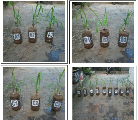 Utilization of Baby Diaper Waste as Anti-Drought Soil Substituent