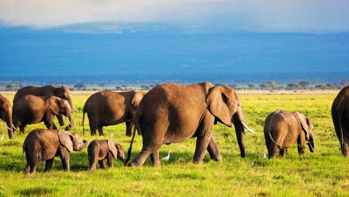 Kenya's Tourist Attractions; where to go and what to do