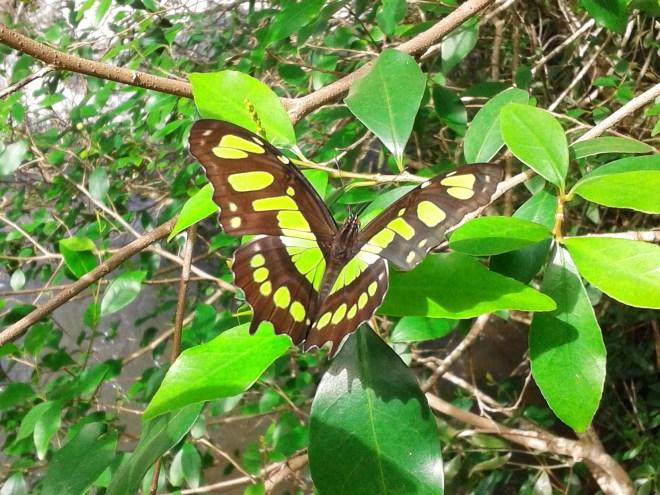 Thebetterplaces_Iguazufalls_butterfly.jpg