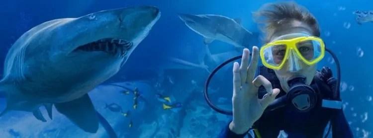 Shark Dive at Melbourne Aquarium