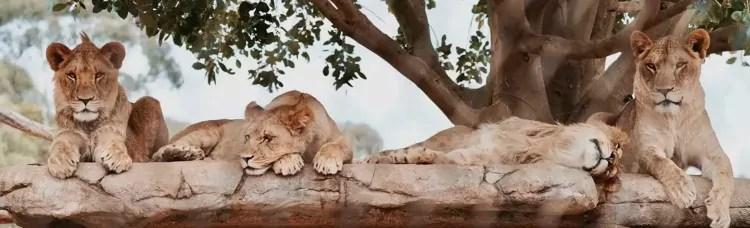 Animals at Werribee Zoo