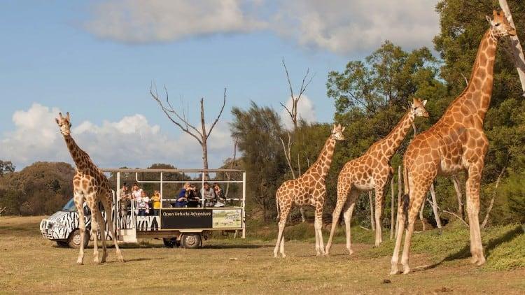 Off Road Werribee Zoo safari