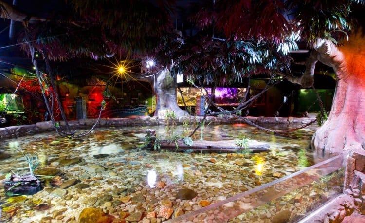 Rainforest Adventure at Melbourne Aquarium
