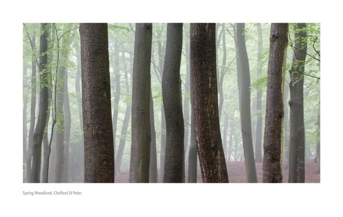 19-Spring-Woodland-1