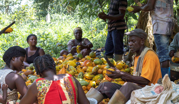 The cocoa story at 64: contributing to economic growth for over a century
