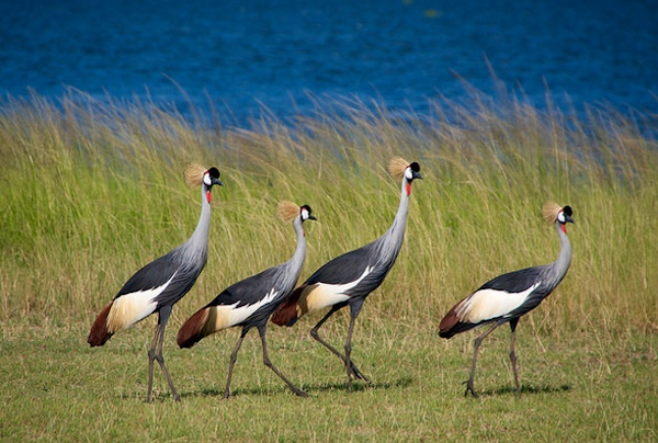 Missing out on bird watching ecotourism prospects
