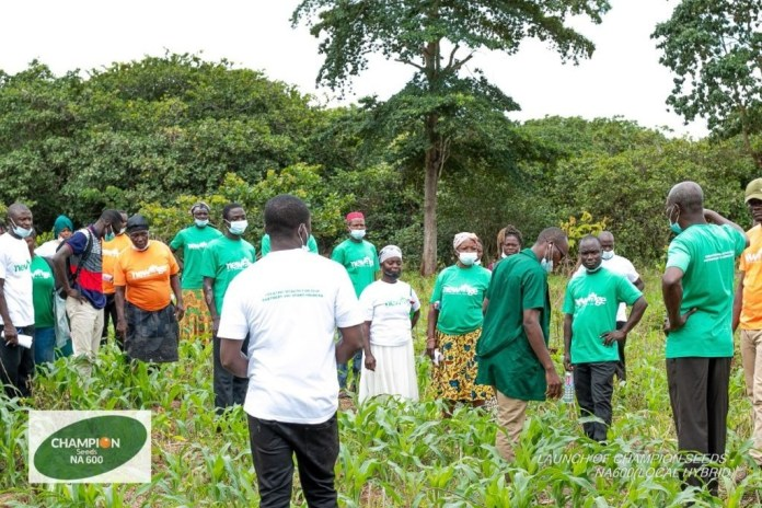 Newage Agric Solutions introduces drought resistance, high yield maize variety
