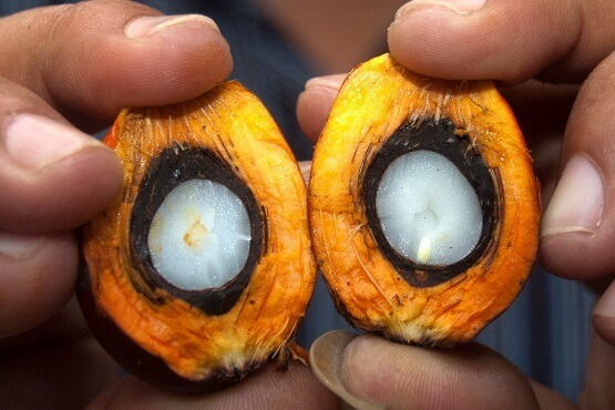 The state of the Oil Palm Industry worldwide