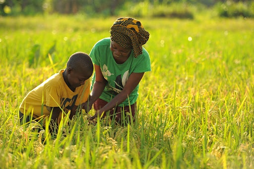 Almost 800,000 minors labour in agriculture sector