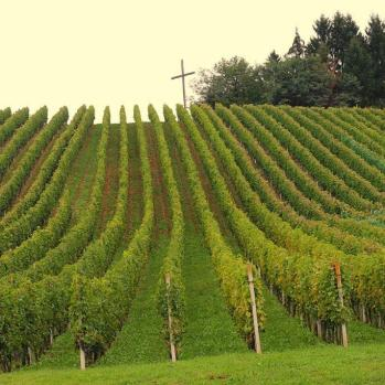 Holy vineyards in Croatia, en route to Zagreb.