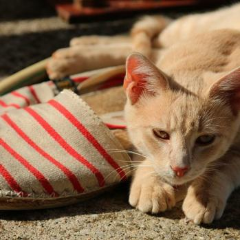 Cat on slippers.