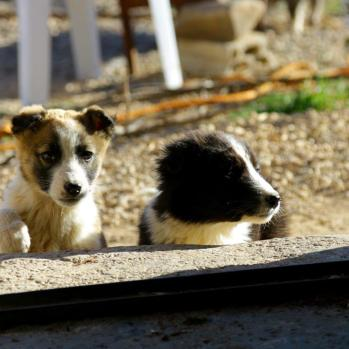 Puppies on the prowl. Seriously consider stealing one.